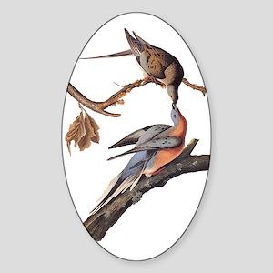 Passenger Pigeon Vintage Audubon Art Sticker