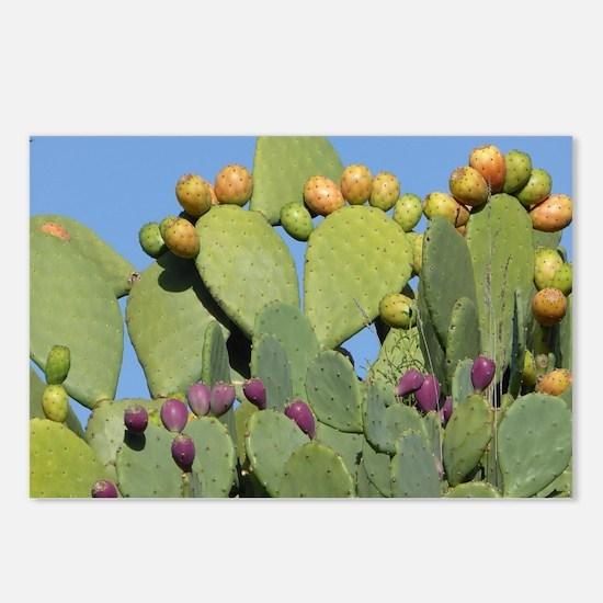Unique Cactus Postcards (Package of 8)