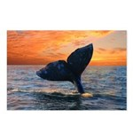 DREAM WHALE Postcards (Package of 8)