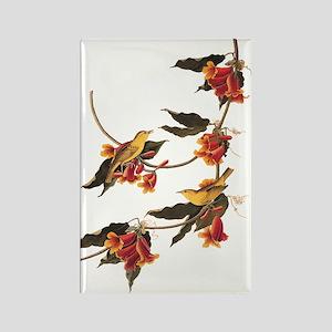 Rathbone's Warblers Vintage Audubon Art Magnets
