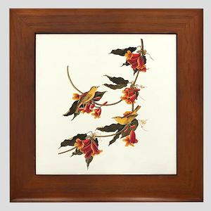 Rathbone's Warblers Vintage Audubon Art Framed Til
