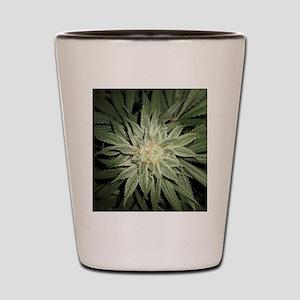 Cannabis Plant Shot Glass