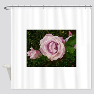 lavender rose in summer Shower Curtain