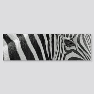 Zebra in Black and White Bumper Sticker