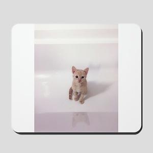 Kitten in bathtub Mousepad