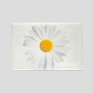 fresh white daisy Magnets