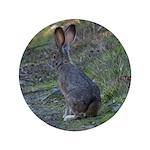 Black Tailed Jackrabbit 3.5