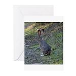 Black Tailed Jackrabbit Greeting Cards (Pk of 20)