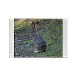 Black Tailed Jackrabbit Rectangle Magnet (100 pack