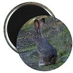 Black Tailed Jackrabbit Magnet