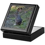 Black Tailed Jackrabbit Keepsake Box