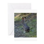 Black Tailed Jackrabbit Greeting Cards (Pk of 10)