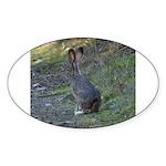Black Tailed Jackrabbit Oval Sticker