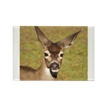 Young Doe Rectangle Magnet (100 pack)