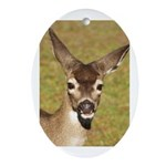 Young Doe Oval Ornament