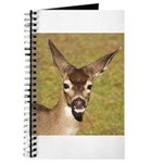 Young Doe Journal