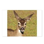 Young Doe Postcards (Package of 8)