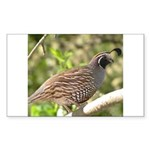 California Quail Rectangle Sticker
