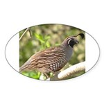 California Quail Oval Sticker