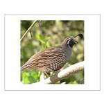 California Quail Small Poster