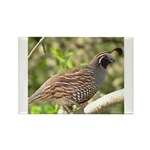 California Quail Rectangle Magnet