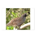 California Quail Postcards (Package of 8)