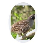 California Quail Oval Ornament