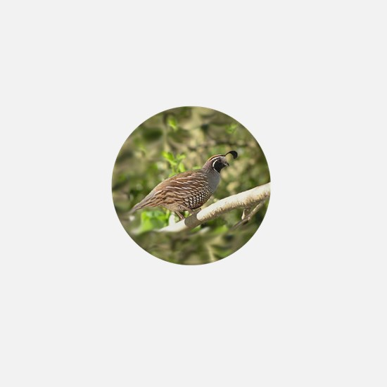 California Quail Mini Button