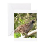 California Quail Greeting Card