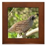 California Quail Framed Tile