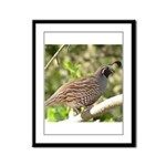 California Quail Framed Panel Print