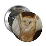 Barn Owl 2.25