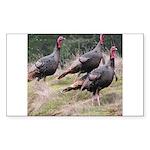 Three Tom Turkey Gobblers Rectangle Sticker