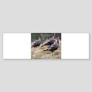 Three Tom Turkey Gobblers Bumper Sticker