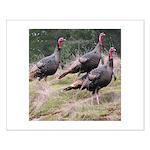 Three Tom Turkey Gobblers Small Poster