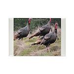 Three Tom Turkey Gobblers Rectangle Magnet (100 pa