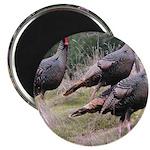 Three Tom Turkey Gobblers Magnet