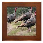 Three Tom Turkey Gobblers Framed Tile