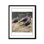 Three Tom Turkey Gobblers Framed Panel Print