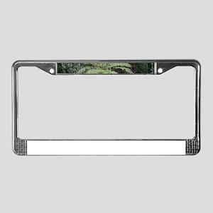 Dandenong Ranges Rainforest 2 License Plate Frame