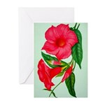 Red Morning Glorys Greeting Cards