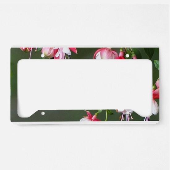 Hummingbird License Plate Holder