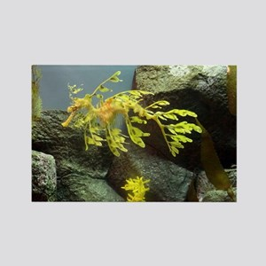 Leafy Sea Dragon with Rocks Magnets