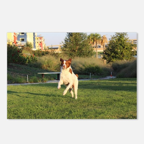 Cute Brittany spaniel Postcards (Package of 8)