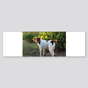 Tropical Pointing Brittany Bumper Sticker