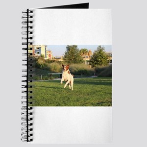 Leaping Brittany Spaniel Journal