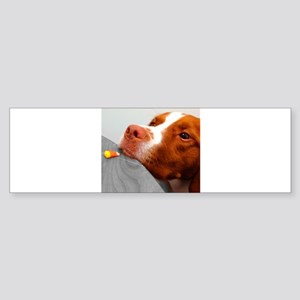 Candy corn dog Bumper Sticker