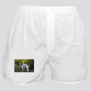 Tropical Pointing Brittany Boxer Shorts