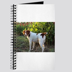 Tropical Pointing Brittany Journal
