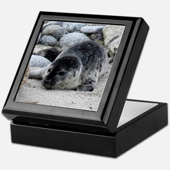 Harbor Seal Pup Keepsake Box